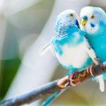 The Top Ten Best Bird Watching Sites in The US