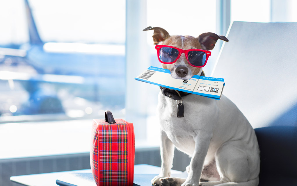 4 Important Things To Remember When Boarding Your Pet
