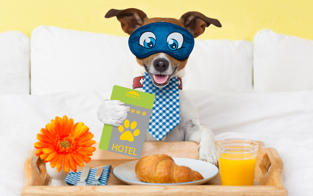 Finding Pet-Friendly Hotels in Your Area